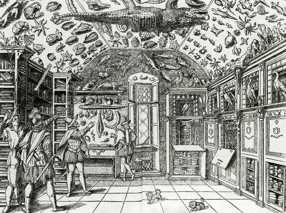 de Wunderkammer - organische vormen - Biophilic Design